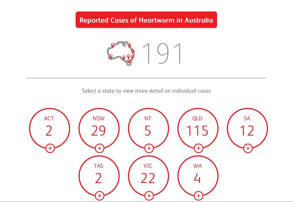Herzwurm-Fälle in Australien